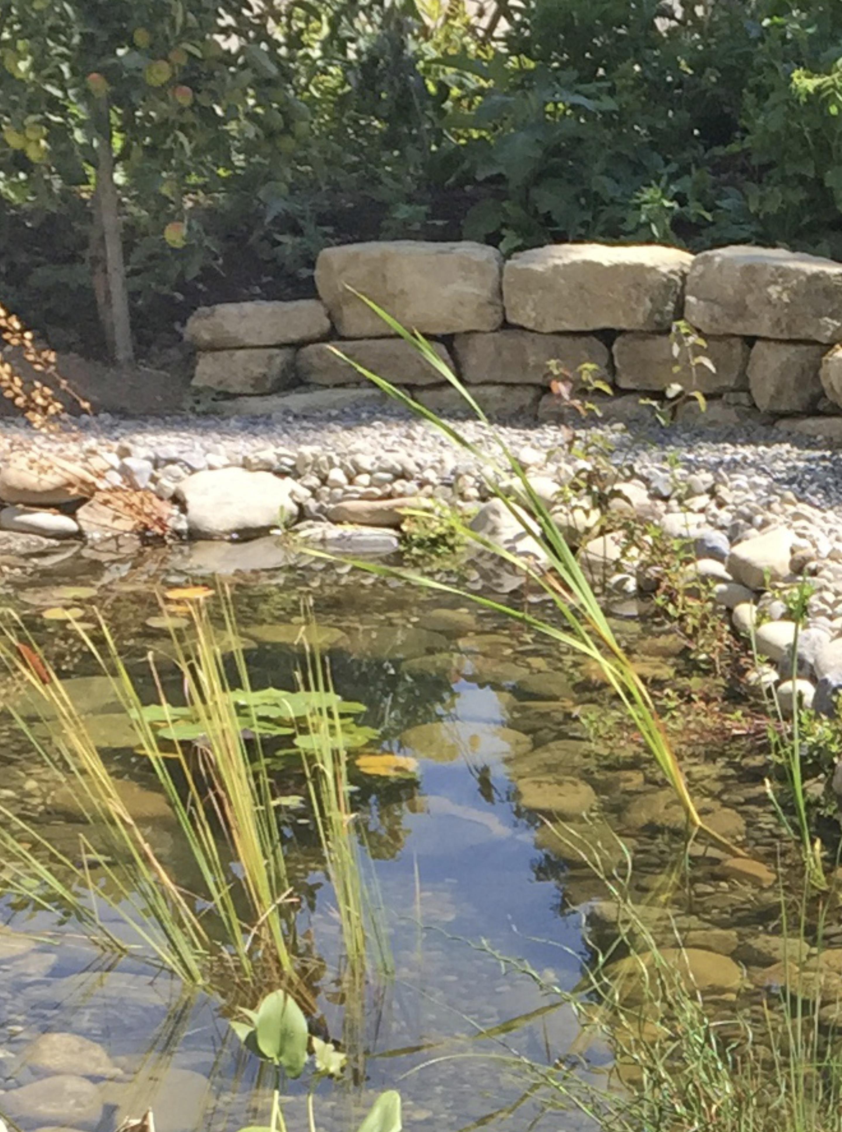 Teich-Meteowasser-und-Dachwasser-Frau-Fadegrad
