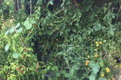 Tomaten und Chili Frau-Fadegrad