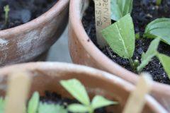 Pflanzenvermehrung-Frau-Fadegrad